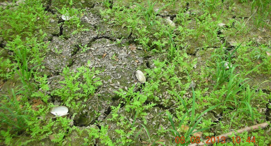 Trockengefallener Floßgraben am Eulen-Geräumt – August 2013