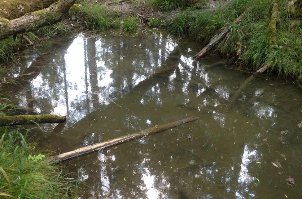 Ehemalige Quelle in die von der Stadt schmutziges Lechwasser zurückgestaut wird