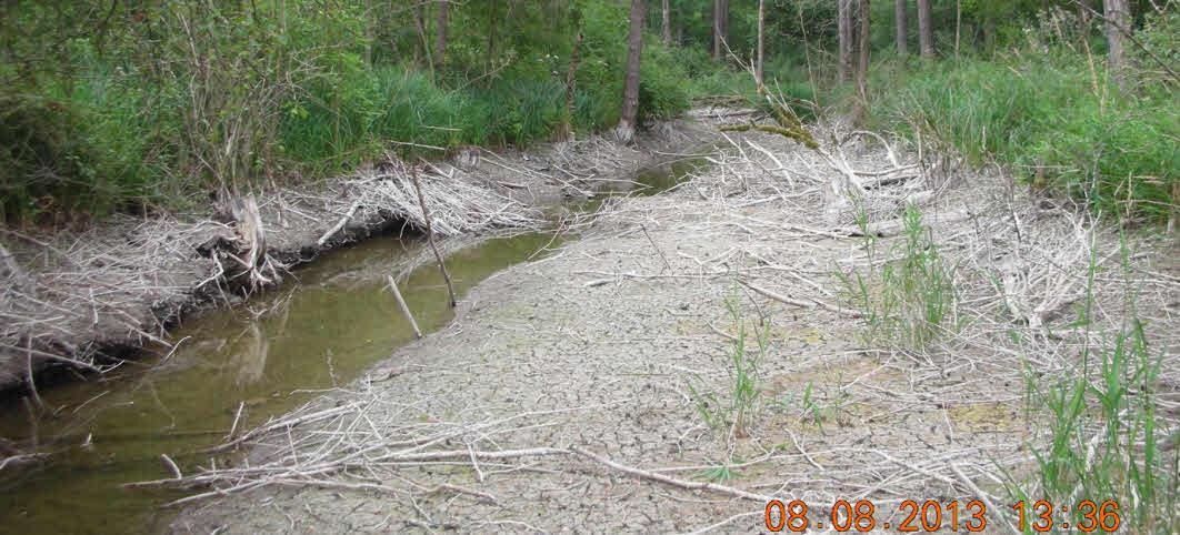 Trockengefallener Floßgraben beim Kupferbichl
